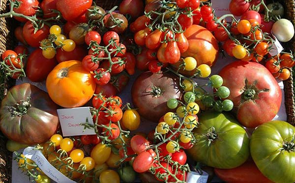 Ateliers bar à tomates